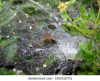 Spider on the web in garden.