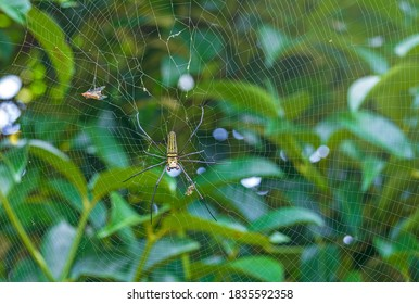 spider on web are known for the impressive webs they weave
