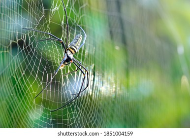 spider on web are known for the impressive webs they weave,selective focus