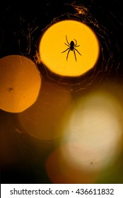 A spider on its web at night lit by the city lights.