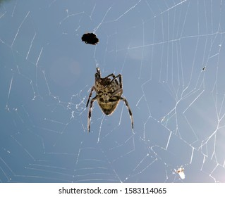 Spider on the web reaching the prey