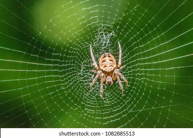 Spider on the web in the sunshine