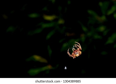spider outside at night spinning a web