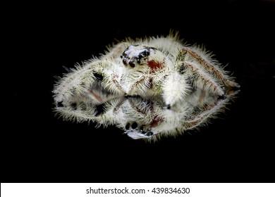 spider reflection
