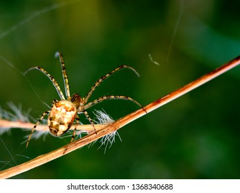 spider in search of food (Selective focus and smail depth of field)