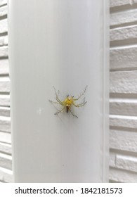 A spider seen in summer in Tokyo, Japan, that is very rare and the name is unknown