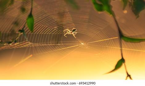 Spider silhouette on an orbital web, under warm bright sunset light