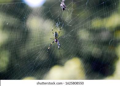 Spider and spider silk is art