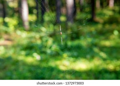 Spider sits in the center of its web in the forest