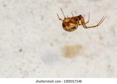 Spider of small size in rural housing interior. Arachnid.