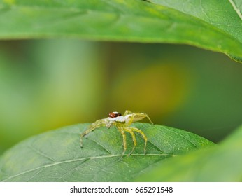 a spider is standing on a leaf