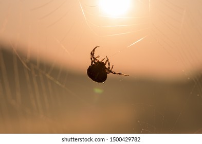 Spider trying to catch the sun. Early summer morning in the meadow. Spider and its web in drops of dew. Cobweb at sunrise. Bright transparent and glittering blurred natural background. Selective focus