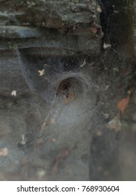 A spider is waiting for his prey on the entrance of his nest, Nest is made of spider web. It is located under a stone, in Carpathian mountains region.
