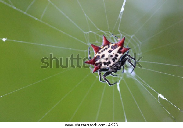 spider waiting in its web