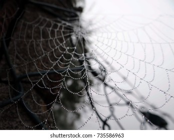 In the spider web