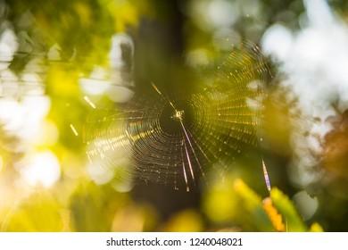 spider web in back light