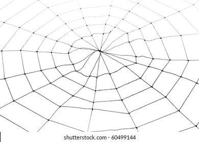Spider Web for background use