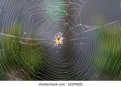 spider in its web, backlit