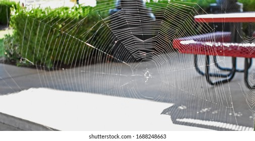 Spider web with a bench and bushes in background