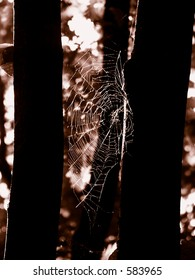 Spider web between two trees
