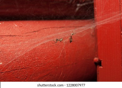 Spider in web with catch at house