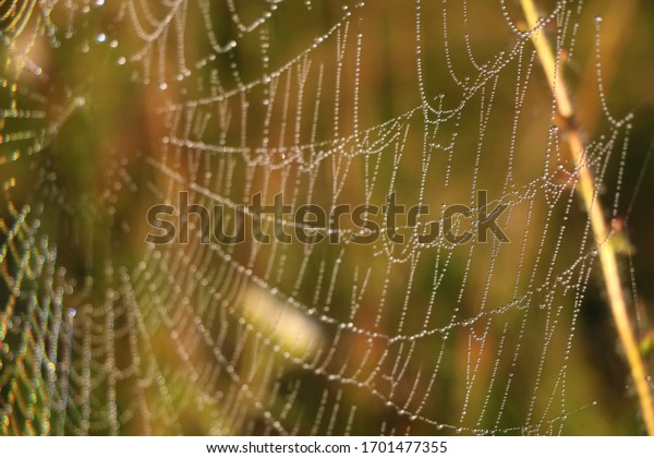 The spider web cobweb closeup background. Selective focus