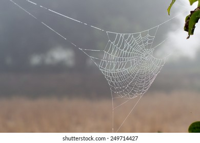 spider web or cobweb with water drops after rain