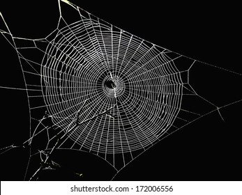 spider web in the dark