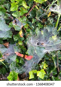 A spider web is a device built by a spider out of proteinaceous  spider silk extruded from its spinnerets.