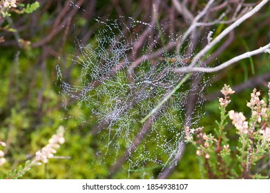 spider web with dew closeup