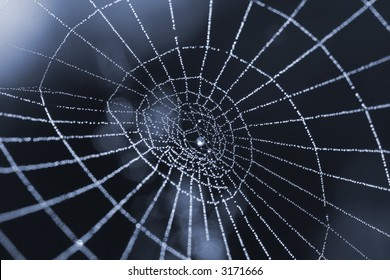 Spider web with dew drops symbolizing internet