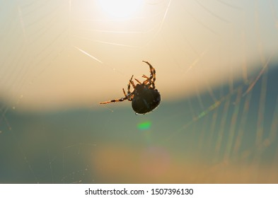 Spider and web in drops of dew at dawn, selective focus. Early summer morning in the meadow. Cobweb at sunrise. Bright transparent and glittering blurred natural background.