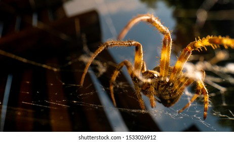 Spider in a web. Extreme close up.  Selective focus.