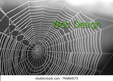 Spider Web Graphic Design Lettering Typography Background Texture.