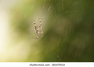 Spider in its web with green unfocused background