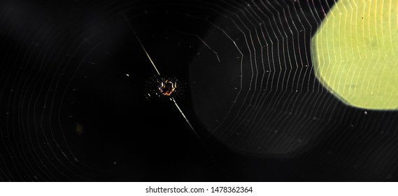 Spider at spider web with light flare