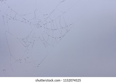 Spider web macro with water drops