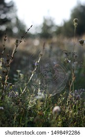 Spider web in a meadow in autumn