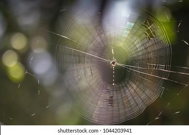 Spider Web in Mexico