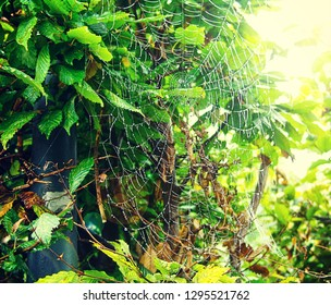 Spider web with morning dew drops against a glowing sunlight and summer foliage, soft focus