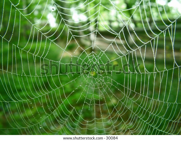 Spider web with morning dew on it.