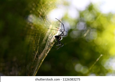 A spider web in nature background. spiderweb or cobweb is a device created by a spider out of proteinaceous spider silk extruded from its spinnerets. generally meant to catch its prey.