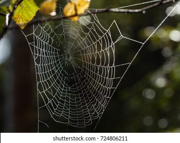 Spider web, spider net and pattern. Morning sun in a forest.