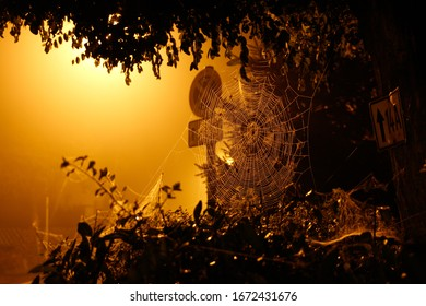 Spider web at night in a bush in front of a road sign