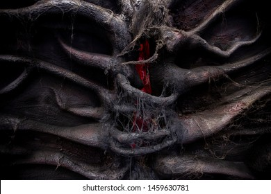 Spider web on the black tree root.