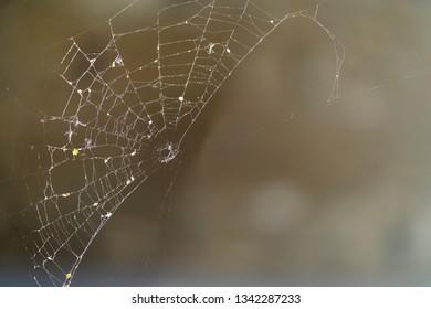 Spider web on blurred background