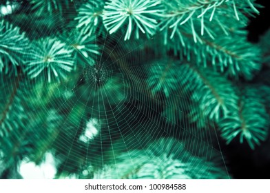 spider web on the branch