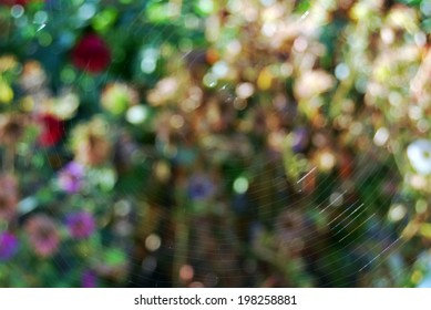 Spider web on a natural background