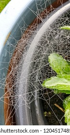 Spider web on a plant