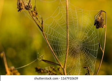 spider web on plant field nature dawn